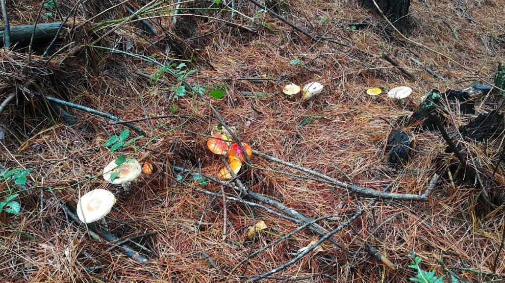 mushroom picking oberon nsw